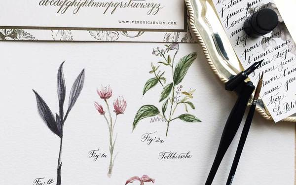 Basic Calligraphy & Botanical Drawing